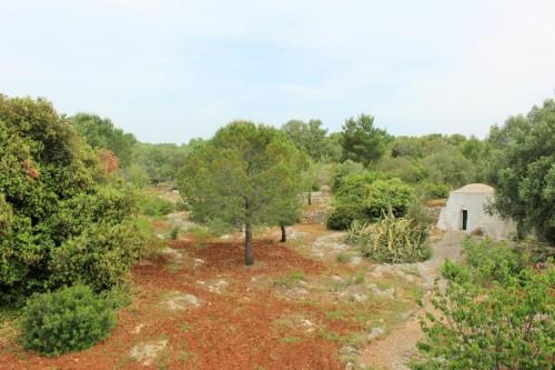 il boschetto intorno la villa